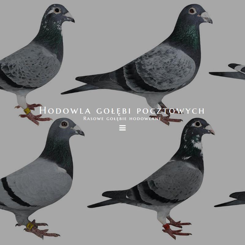 Najszybsze gołębie